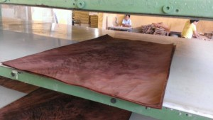 crotch-mahogany-nuoc-lam-mem-veneer-veneer-softener-pacificmaterial_12